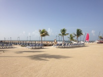 The view at Guy Harvey's
