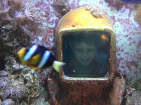 Under the sea at the History of Diving museum