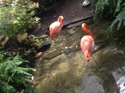 Flamingo sighting