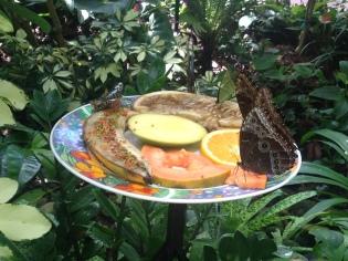Butterflies feeding