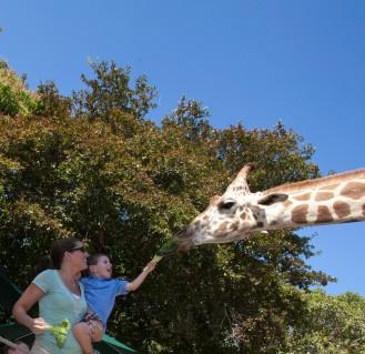 Naples Zoo (3)
